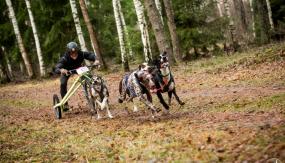 """PK posmā kamanu suņu sportā un """"Latvian Open"""" sacensībās startēs 6 valstu pārstāvji"""