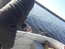 Valsts vides dienests zveju uzraudzīs arī pirmssvētku un svētku laikā
